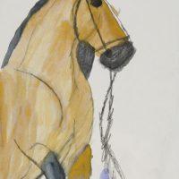 Pferd, 2014, Aquarell, Graphit
