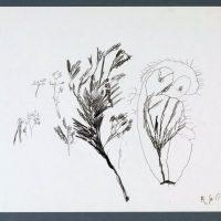 Pflanzentier, 1999, Graphit